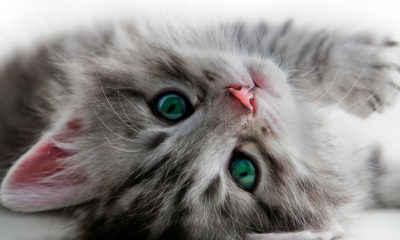Airport Offers Kitten Cuddles to Help Avoid Pre-Flight Stress