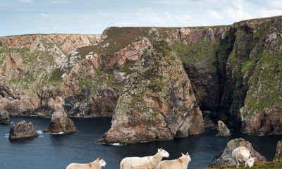 Tiny Irish Island Invites Americans to Move There