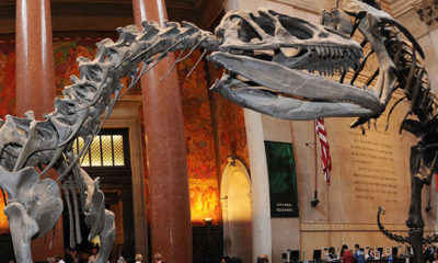 New York City Museums Will Reopen This Month