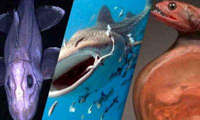 The Most Amazing Ocean Creatures