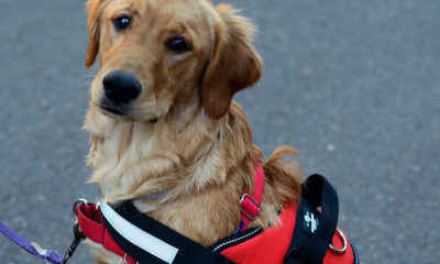 Airlines Cracking Down on Emotional Support Animals